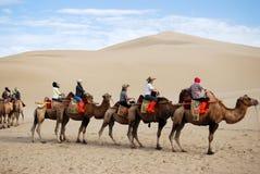 Караван верблюда в пустыне Стоковые Фото