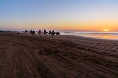 Караван верблюда на пляже на заходе солнца Essaouira Стоковое Фото