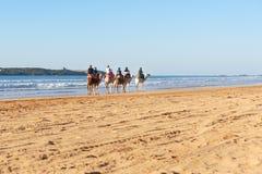 Караван верблюда на пляже Essaouira Марокко Стоковые Фото