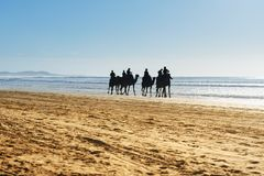 Караван верблюда на пляже Essaouira Марокко Стоковое Фото