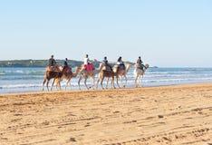 Караван верблюда на пляже Essaouira Марокко Стоковые Изображения RF