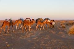 Караван верблюда на пустыне Стоковые Фото