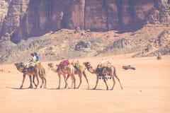 Караван верблюда путешествуя в роме вадей, Джордане Стоковая Фотография