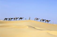 караван верблюда Стоковые Изображения