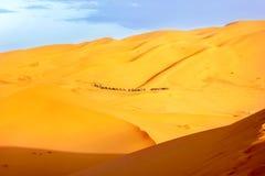 Караван верблюдов среди песчанных дюн в пустыне Сахары вышесказанного Марокко Стоковое Изображение