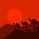 Караван верблюда в векторе шаржа пустыни Стоковая Фотография