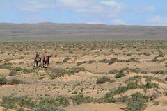 Караван верблюда в пустыне Гоби Стоковая Фотография RF