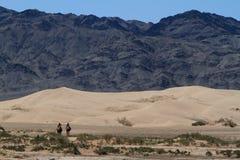Караван верблюда в пустыне Гоби Стоковые Фотографии RF