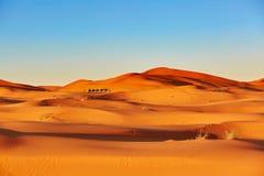 Караван верблюда в пустыне Сахары, Марокко Стоковая Фотография RF