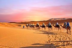 Караван верблюда идя через песчанные дюны в пустыне Сахары, Стоковые Фотографии RF