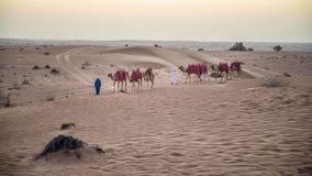 Караван верблюда идя через песчанные дюны в пустыне Стоковое фото RF