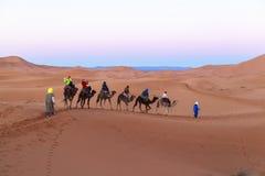 Караван верблюда на пустыне Сахары, Марокко Стоковое Фото
