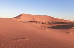 Караван верблюда на пустыне Сахары, Марокко Стоковое Изображение