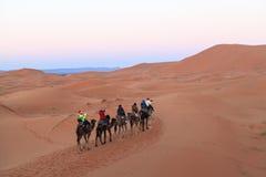 Караван верблюда на пустыне Сахары, Марокко Стоковые Фотографии RF