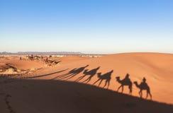Караван верблюда на пустыне Сахары, Марокко Стоковые Изображения RF