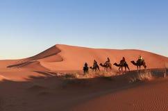 Караван верблюда на пустыне Сахары, Марокко Стоковые Изображения