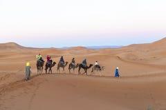 Караван верблюда на пустыне Сахары, Марокко Стоковое Изображение RF