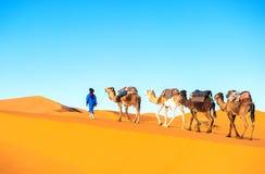 Караван верблюда на пустыне Сахары Стоковое Фото