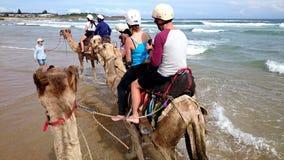Караван верблюда на пляже Стоковые Фото