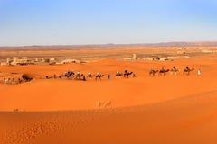 Караван верблюдов, пустыня Сахары, Марокко Стоковое Изображение RF