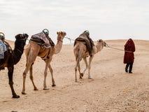Караван в пустыне Сахары на заходе солнца двигает прочь к горизонту Стоковое фото RF