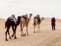 Караван в пустыне Сахары на заходе солнца двигает прочь к горизонту Стоковые Фото
