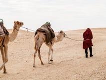 Караван в пустыне Сахары на заходе солнца двигает прочь к горизонту Стоковое Фото