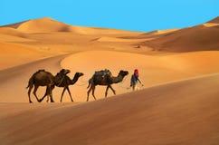 Караван в пустыне Стоковая Фотография RF