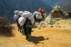 Караван горы животных яков в Гималаях Стоковые Фотографии RF