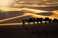 Караван пустыни Стоковые Фотографии RF