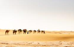 Караван дромадера, долина Draa (Марокко) Стоковое Изображение