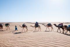 Караван дромадера, Hamada du Draa (Марокко) Стоковое фото RF