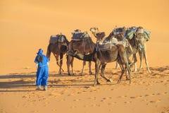 Караван сафари верблюда в Сахаре Стоковые Изображения