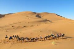 Караван сафари верблюда в Сахаре Стоковые Фотографии RF