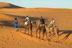 Караван сафари верблюда в Сахаре Стоковая Фотография
