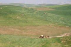 караван Стоковые Фотографии RF
