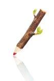 карандаш в реальном маштабе времени Стоковое Фото