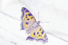 Карандаш иллюстрации: бабочка около окна Стоковая Фотография RF