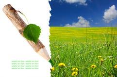 карандаш картины листьев травы деревянный Стоковая Фотография RF