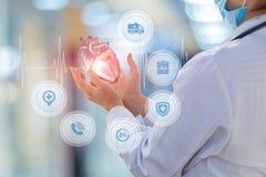 Кардиолог доктора показывает сердце стоковые фотографии rf