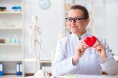 Кардиолог с красным сердцем в медицинской концепции стоковое изображение rf