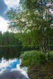 Карельская береза на береге озера Стоковая Фотография