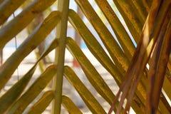 карибская ладонь стоковая фотография rf