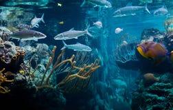 Карибская жизнь моря Стоковые Изображения RF
