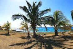 карибские ладони свободного полета Стоковая Фотография RF