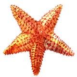 Карибские starfish на белой предпосылке Стоковые Изображения