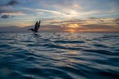 карибский заход солнца Стоковая Фотография
