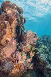 карибский коралловый риф стоковая фотография rf