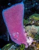 карибский коралловый риф стоковое изображение rf