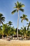 Карибский пляж с много ладонями и белым песком Стоковые Изображения